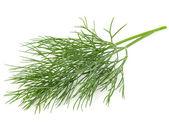 зеленый укроп — Стоковое фото