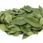 Laurel leaf on white background — Stock Photo #11490434