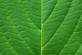 绿叶纹理与水滴 — 图库照片