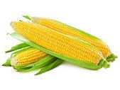Uma espiga de milho — Foto Stock