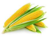 An ear of corn — Foto de Stock