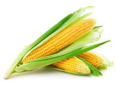 Una mazorca de maíz — Foto de Stock