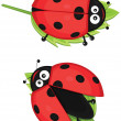 Isolated ladybug vector illustratiion — Vettoriali Stock