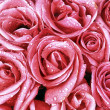 Stock Photo: Pink roses closeup with water drops