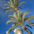 Two palm trees on sunny blue sky — Stock Photo #11895971