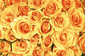 Yellow roses bouquet with water drops — Stock Photo