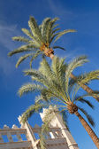 Two palm trees on sunny blue sky — Stock Photo