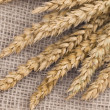 Wheat — Stock Photo #11239987