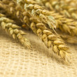Wheat on the textile background — Stock Photo