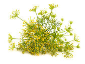 Fennel flower isolated on the white — Stock Photo