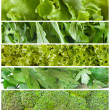Stock Photo: Fresh green salads