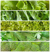 Fresh green salads — Foto de Stock