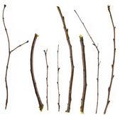 Coleção de ramos — Foto Stock