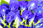 Clitoria ternatea also known as the Butterfly Pea Flower. — Stock Photo