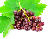 Red grapes with fresh leaves. — Stock Photo