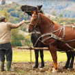 Farmer with two horses in field — Stock Photo #11375866