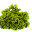 Fresh lettuce isolated — Stock Photo