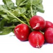 Bunch of fresh radish - Stock Photo
