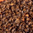 Busy bees working diligently on their honey comb - Stock Photo