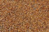 玉米干燥过程中在中国中的太阳. — 图库照片