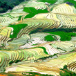 Stock Photo: Terraced rice field, water fall