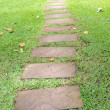 Walk way in garden — Foto de Stock