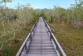 Un puente de madera — Foto de Stock