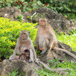 Monkey family (Macaca fascicularis) at khao wang ,Petchburi Thai — Stock Photo #12083655