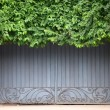 Old door covered by foliage — Stock Photo #12085460