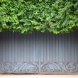 Old door covered by foliage — Stock Photo