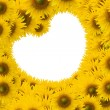 Foto de Stock  : Beautiful sunflower with white space heart shape