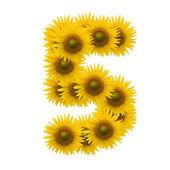 5,Sun flower alphabet isolated on white — Stock Photo