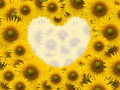 Beautiful sunflower with space heart shape — Stock Photo