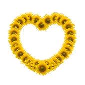 Sunflower heart image isolate on white — Stock Photo