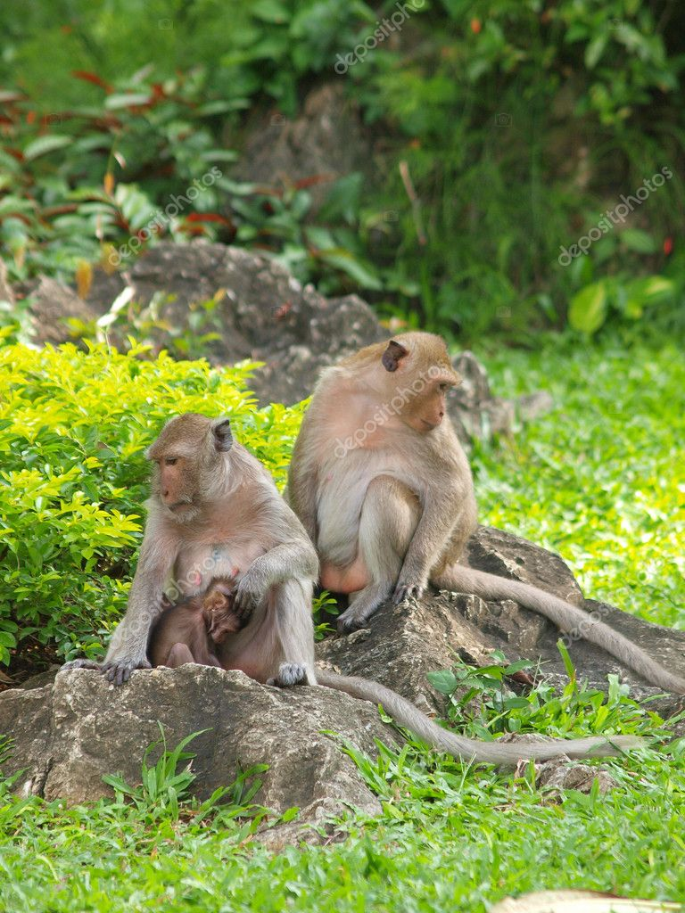 Monkey family (Macaca fascicularis) at khao wang ,Petchburi Thailand — Stock Photo #12083509