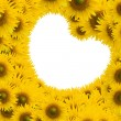 Beautiful sunflower with white space heart shape — ストック写真