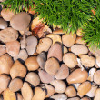 grass and stones — Stock Photo