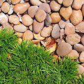 Gras und steine — Stockfoto