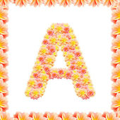 A,flower alphabet isolated on white with flame — Stock Photo