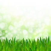 Abstract green tone bokeh background with green grass. — Stock Photo