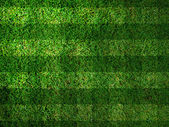 Vivid Green grass background,Can use as background — Stock Photo