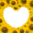 Beautiful sunflower with white space heart shape - Stock Photo