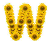 Alphabet W, sunflower isolated on white background — Stock Photo