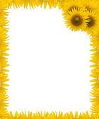 Background Sunflower frame design — Stock Photo
