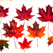 Set of beautiful autumn leaves — Foto Stock