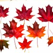 Set of beautiful autumn leaves — Stok fotoğraf