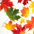 Set of beautiful autumn leaves — Stock Photo