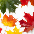Set of beautiful autumn leaves - Foto Stock