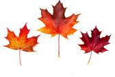 Sada krásných podzimní listí. — Stock fotografie
