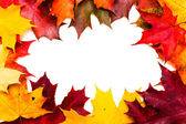Frame of red and yellow maple leaves — Stock fotografie